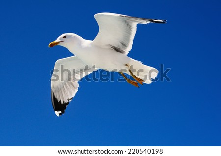 White seagull soaring in the blue sky - stock photo