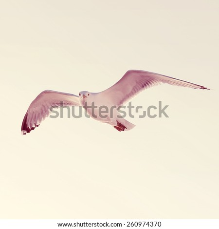 White seagull soaring in the blue sky.Special toned photo in vintage style - stock photo