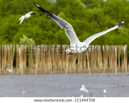 White seagull soaring in the rain forest background - stock photo