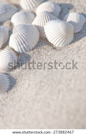 White seashells on the sand