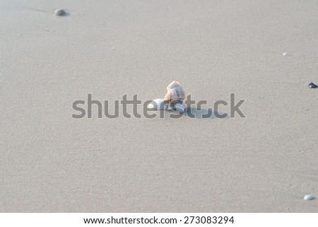 White shell on beach - stock photo
