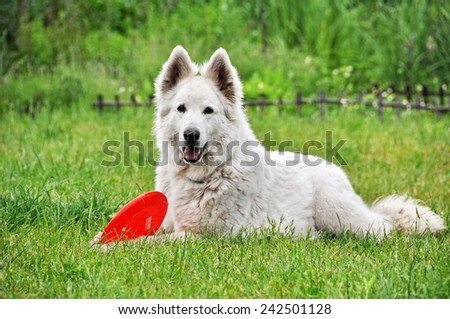 White Shepherd lying on the grass - stock photo