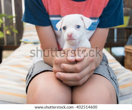 White Small Breed Puppy Being Held on Lap of Child  - stock photo