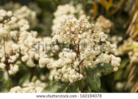 White small decorative natural flowers.