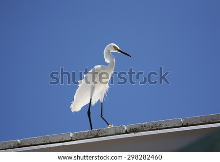 white snow egret sits on the roof on a background blue sky