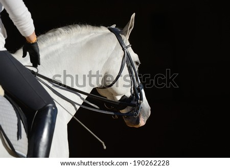 White sport horse with the rider - stock photo