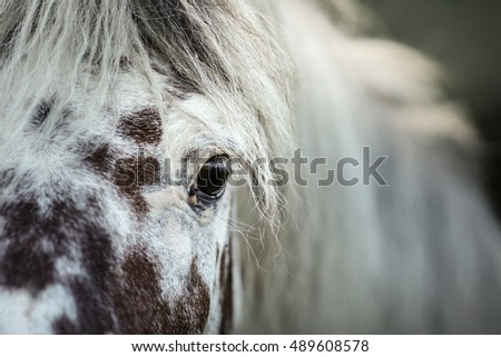White spotted horse portrait, walk on the paddock in summer