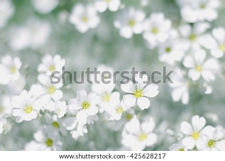 white spring flowers field - springtime background