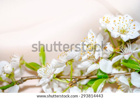white spring flowers on a tree branch on pastel background