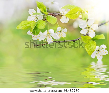 white spring flowers on a tree branch over water waves and green bokeh background close-up - stock photo