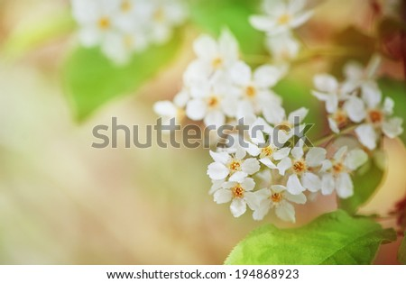 White spring flowers on the tree