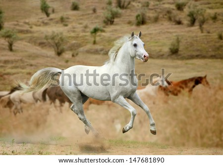 white stallion in dust - stock photo