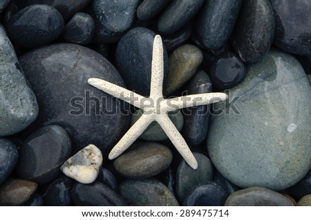 White starfish and wet pebbles background - stock photo