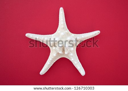 White Starfish on Red Cardboard Background