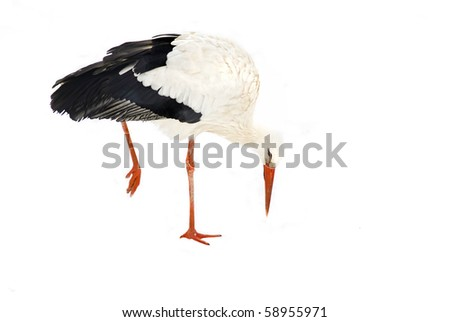 white stork  (Ciconia ciconia) cut out