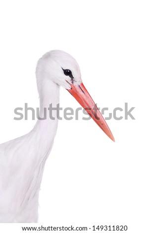 White Stork - Ciconia ciconia. Isolated on white. - stock photo