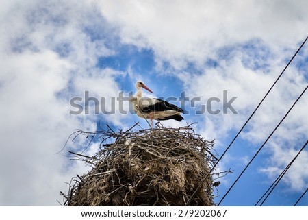 White stork in his nest full of sparrows on cloudy blue sky closeup