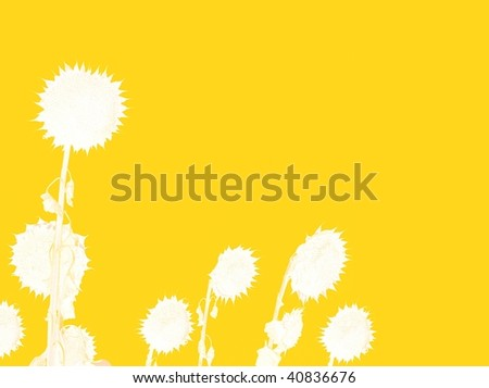 White sunflowers on yellow background