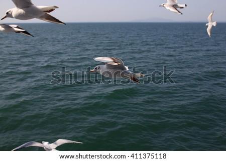 white swallows in kyuchu, japan  - stock photo