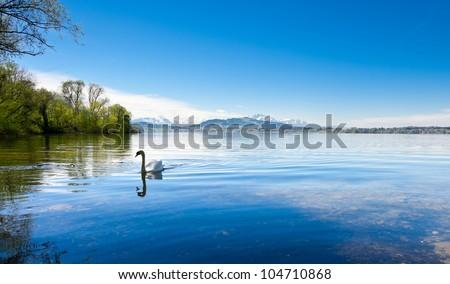 White Swan on the Lake Zuger, Switzerland - stock photo