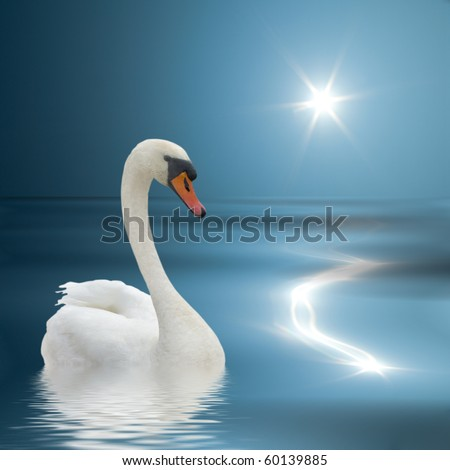 White swan swimming on the blue water.