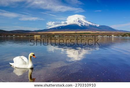 White Swan with Mount Fuji at Yamanaka lake, Yamanashi, Japan - stock photo