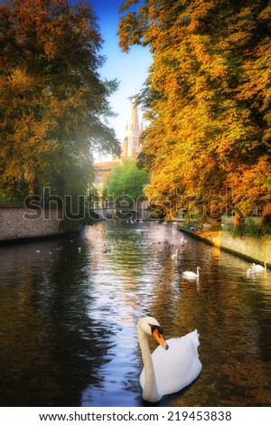 White swans in canal at autumn day. Bruges, Belgium - stock photo