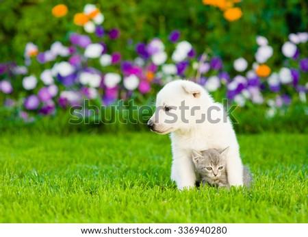 White Swiss Shepherd`s puppy embracing kitten on green grass. - stock photo