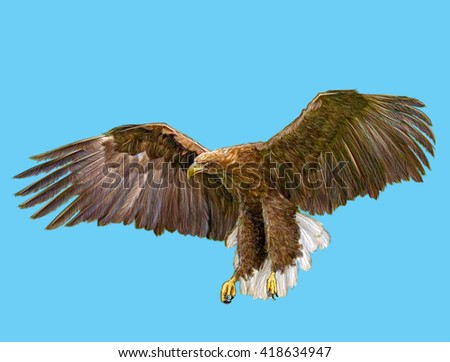White tail eagle landing hand draw on blue sky background illustration.