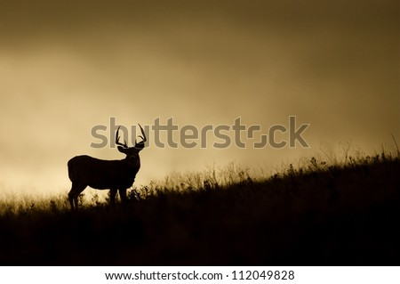 White-tailed Buck Deer silhouette, on prairie ridge top at sunrise / sunset, Flathead Indian Reservation, Montana; whitetail / white tail / white-tail / white tailed / whitetailed - stock photo