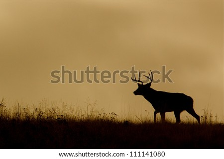 White-tailed Buck Deer silhouette, running on ridge top at sunrise / sunset, Flathead Indian Reservation, Montana; whitetail / white tail / white-tail / white tailed / whitetailed - stock photo