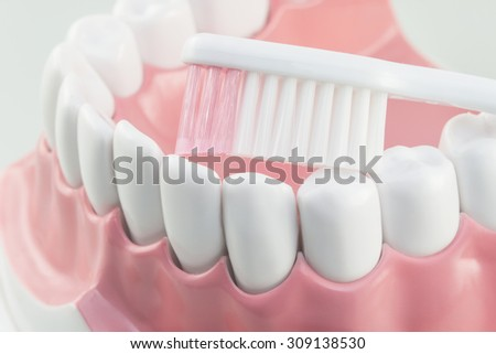 White teeth model and tooth brush on white background.