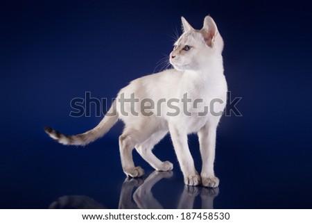 white thai - stock photo
