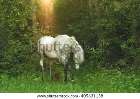 White thoroughbred stallion in the woods, Andalusian stallion, andalusia stallion - stock photo