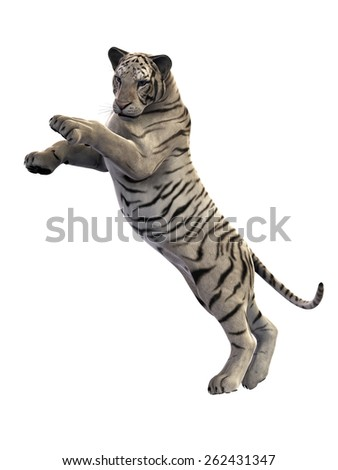 White Tiger attacking, isolated on white background
