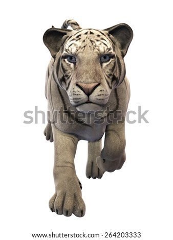 White Tiger front view, isolated on white background