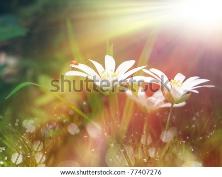 white tinny flower under the morning sunlight - stock photo