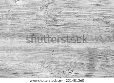 WHITE TREE BARK TEXTURE - stock photo