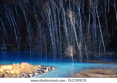 white tree in a blue lake