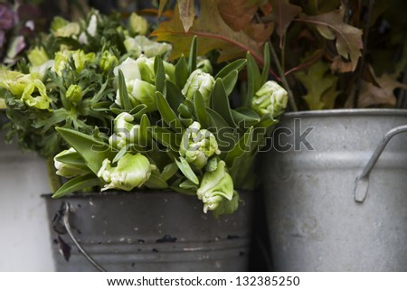 white tulip in basket in flower shop - stock photo