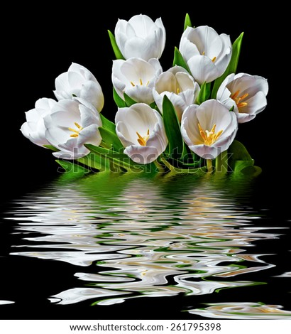 white tulips - stock photo