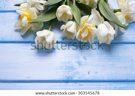 White tulips and narcissus flowers  on blue  painted wooden background. Selective focus. Place for text.  - stock photo