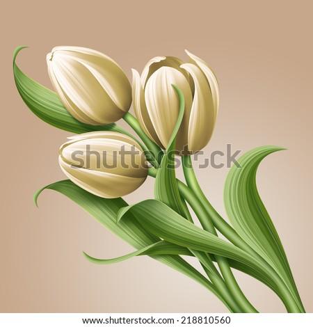 white tulips floral illustration, flowers arrangement - stock photo