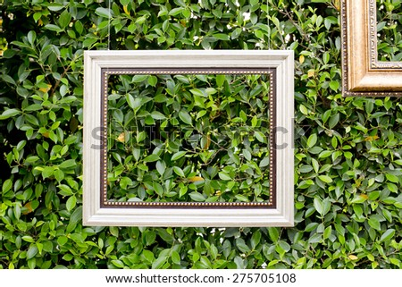 white vintage frames on green small leaf wall