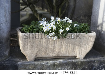 white violets in a flowerbed as decoration Street