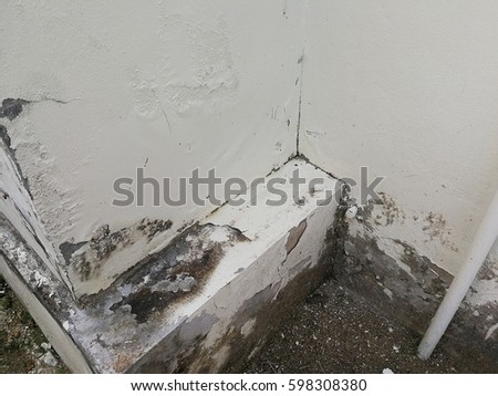 Fungus On Wall Stock Images Royalty Free Images Amp Vectors