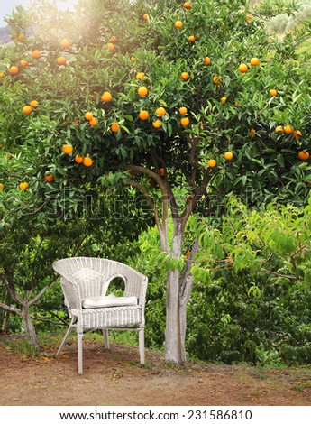 White wicker chair under fruit tree in orange grove garden - stock photo