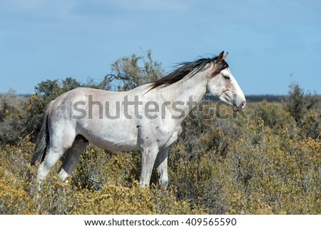 white wild horse on blue sky background in Patagonia, Argentina