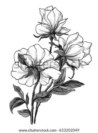 white wild roses flowers bouquet blossom stock illustration
