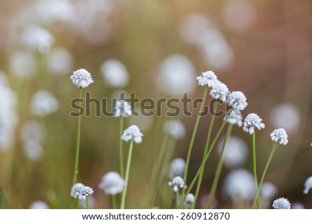 White wildflowers - stock photo